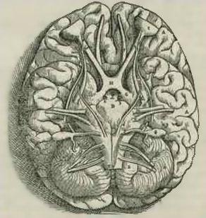 ¿Cómo Internet cambia el funcionamiento del cerebro?